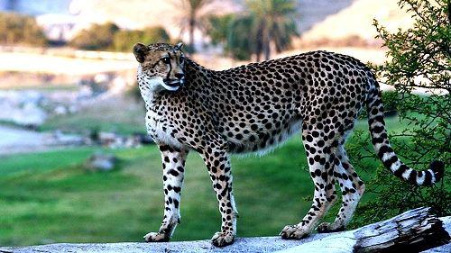圣地亚哥野生动物园门票多少钱_圣地亚哥野生动物园_.