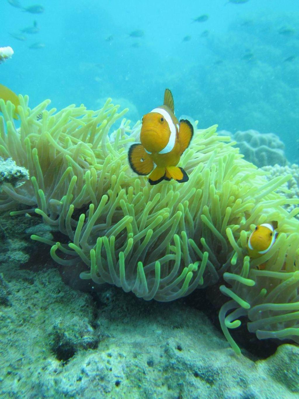 壁纸 动物 海底 海底世界 海洋馆 水族馆 鱼 鱼类 1024_1365 竖版 竖