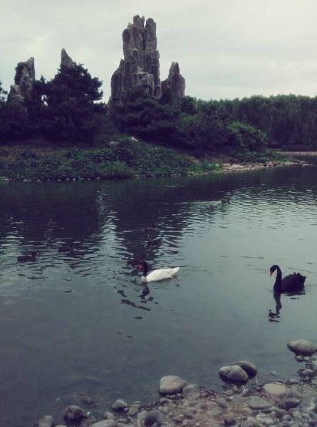 北京动物园攻略一日游_北京动物园半日游攻略