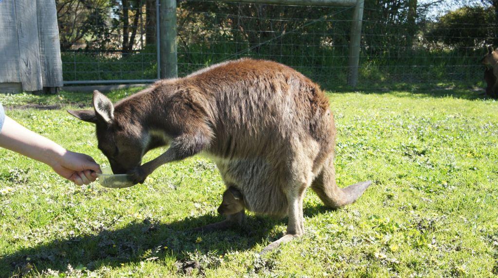 圈养的动物感觉都比较懒惰了,只有对食物有兴趣,对人们的来访都已经习