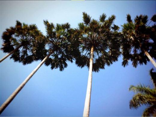 热带植物园图片