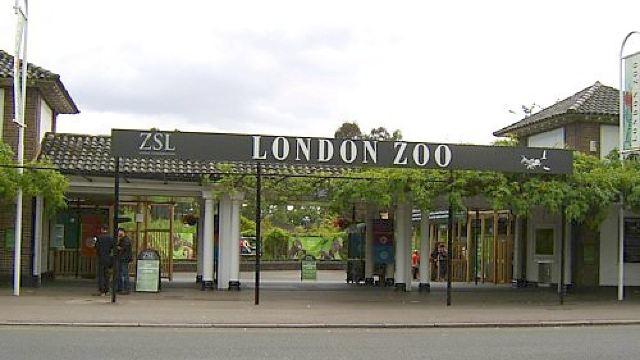 伦敦动物园是世界上最早的野生科学动物园