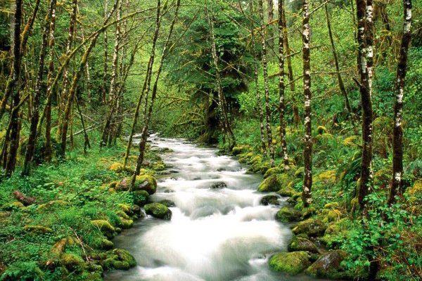 铁杉,乔松,桦树,杜鹃树,落叶松,红豆杉,柏树,白杨树,藏青杨等等.