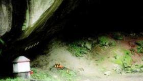 桃园蝙蝠洞