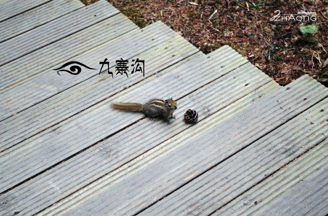 在这里还可以看到小松鼠,你可以准备点瓜子之类的把它们叫过来,拍照.