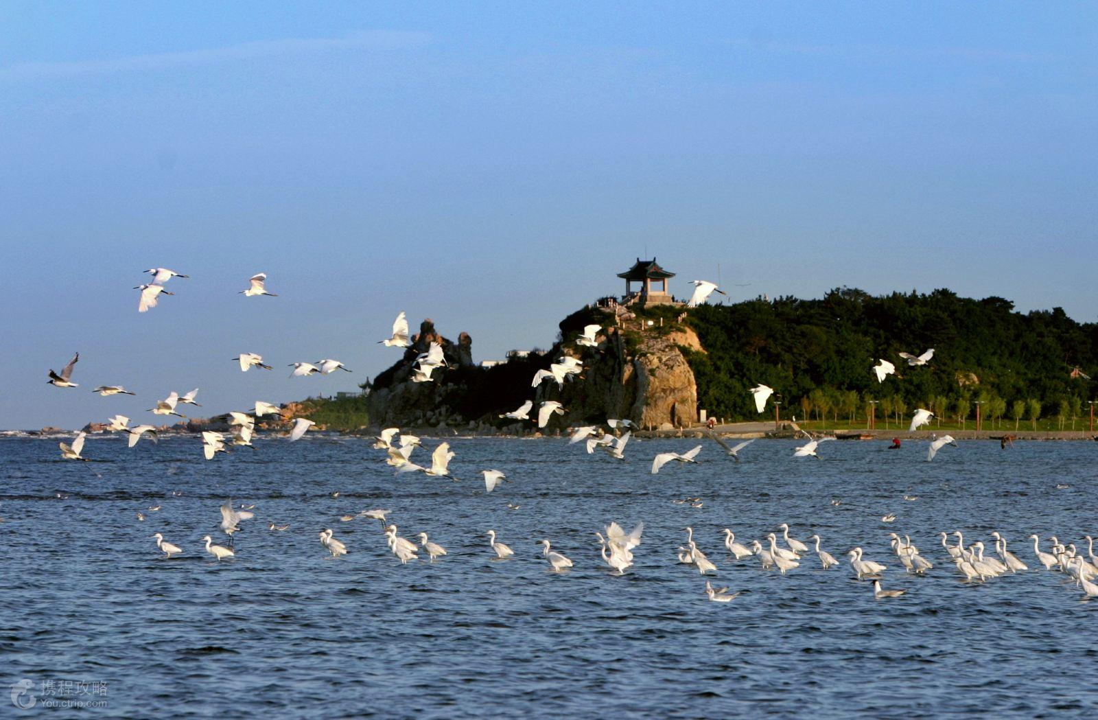 赏花游 河北北戴河 山海关 秦皇岛3日2晚跟团游 亲,暑期一起去看海吧