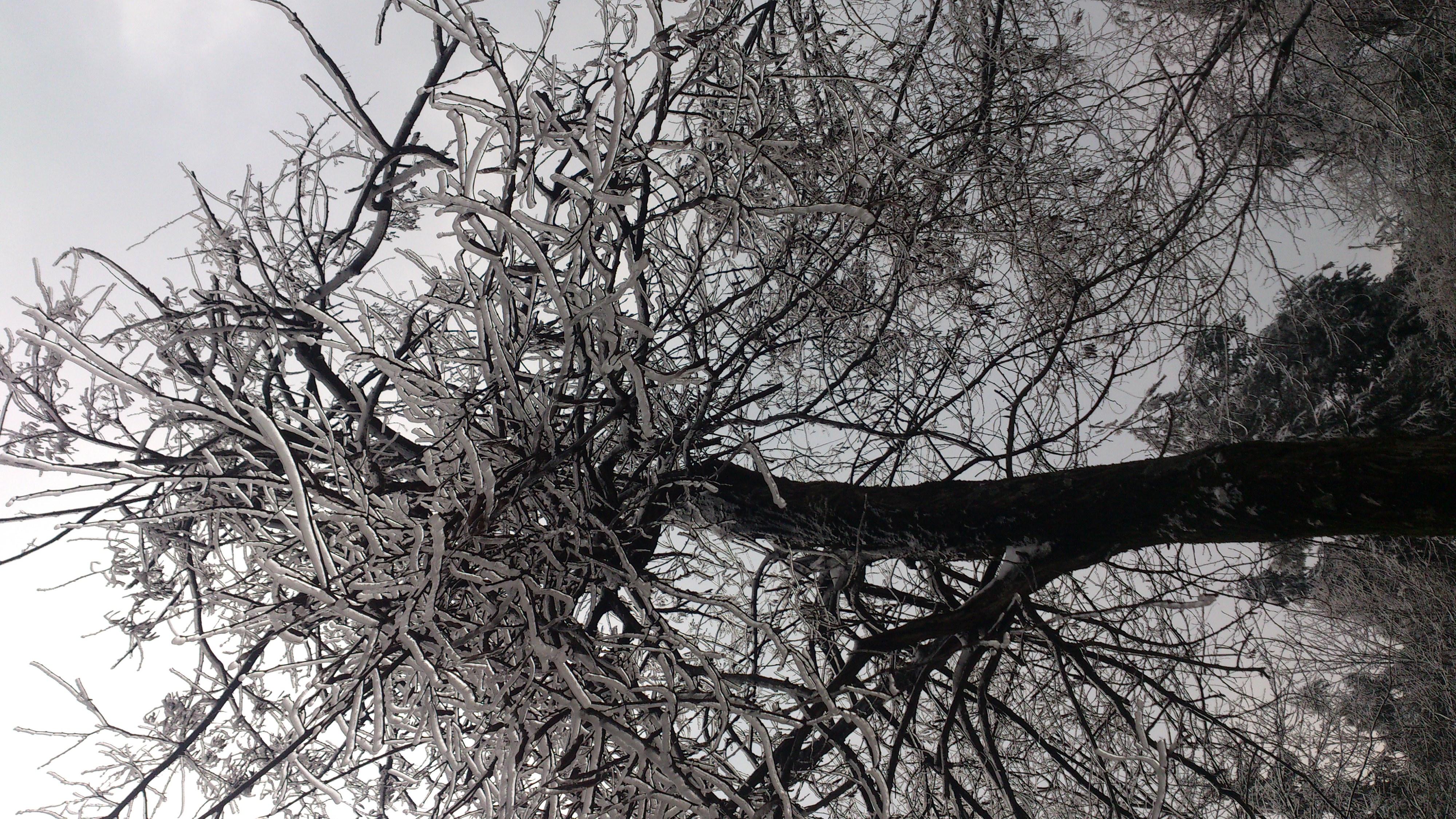 古代天子墓地栽什么树