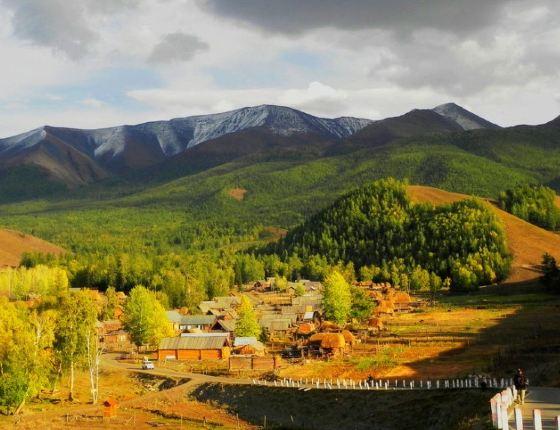 与哈萨克斯坦的大山遥遥相望,阿尔泰山上密密麻麻的金黄金黄的松树林