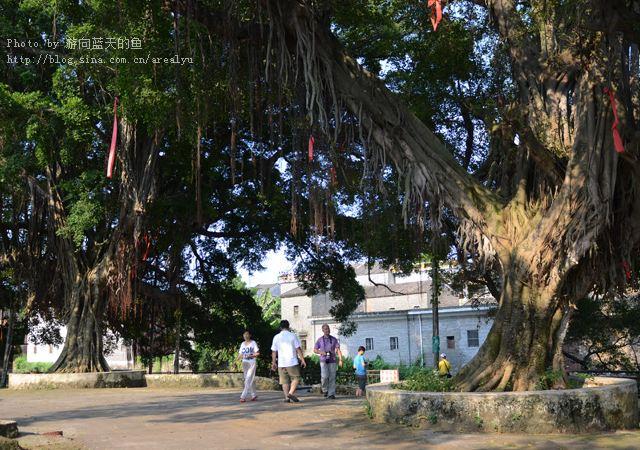 广东肇庆鼎湖山与七星岩同时出现姻缘树?美美带你一探究竟。。。