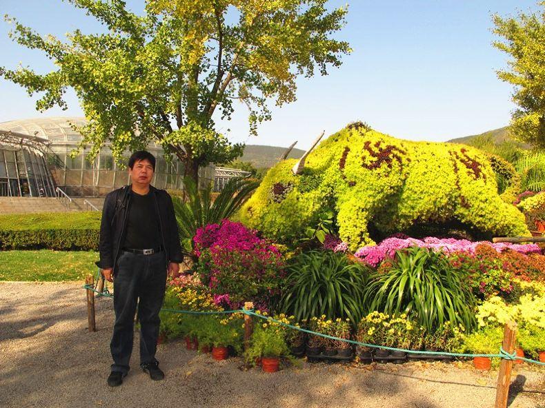 北京植物园菊花节