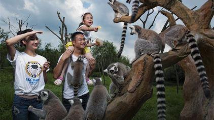 """这里是杭州野生动物世界""""猿猴部落"""""""