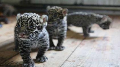 神雕山野生动物自然保护区门票