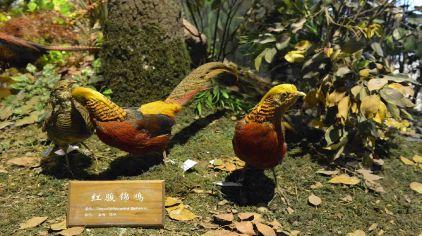 栩栩如生的动物标本和似真似幻的图片风景让游客