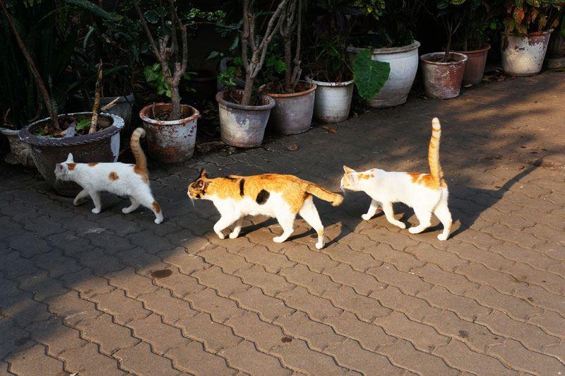 寺庙主殿的周围,居然全是可爱的动物们!