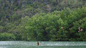 红树林生态保护区