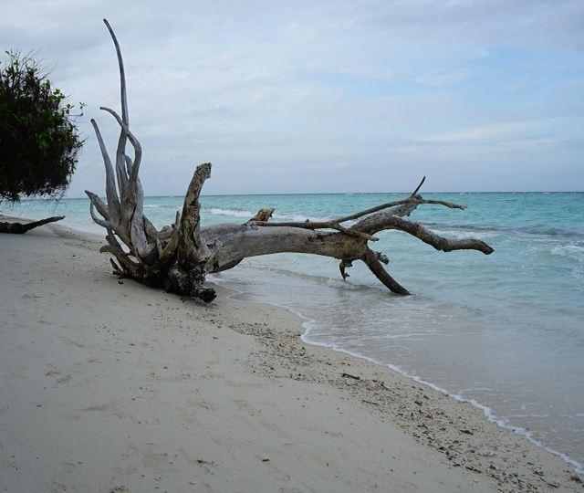 海边的枯树