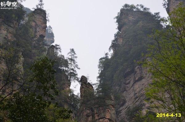石峰顶端长满了葱郁的松树