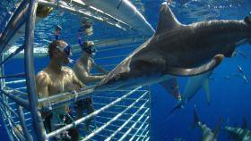 水底鲨鱼观光活动