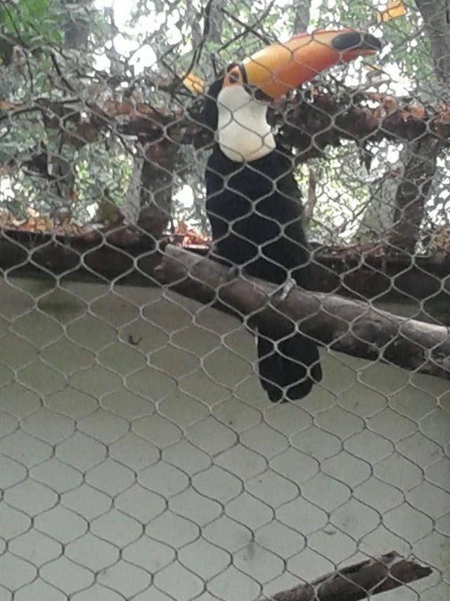 从清波门坐公交车到杭州野生动物园要多长时间?