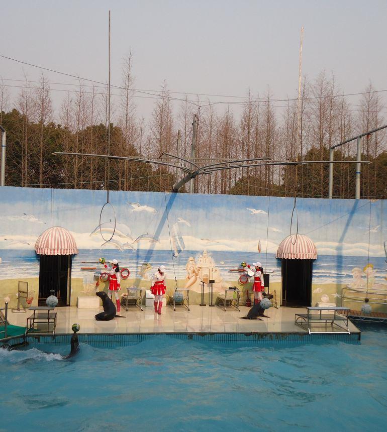 上海野生动物园线路 上海火车站到上海野生动物园 九江路帝悦大酒店