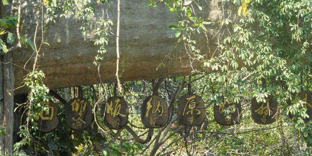 西双版纳原始森林公园里还西息着上千种动物.