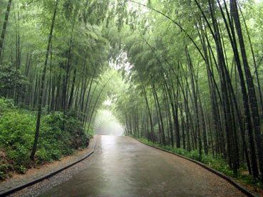 走在竹林中,看着两边成片的竹林,听着山间潺潺的流水声,感觉心情很是图片