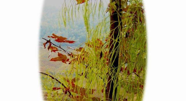 游走桂林山水(5)--大寨梯田