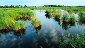 白渔泡湿地公园
