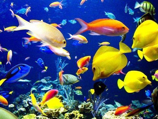 海底世界图片图片素材免费下载-千图网www.58pic.com pic.58pic.