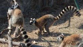 森林野生动物世界