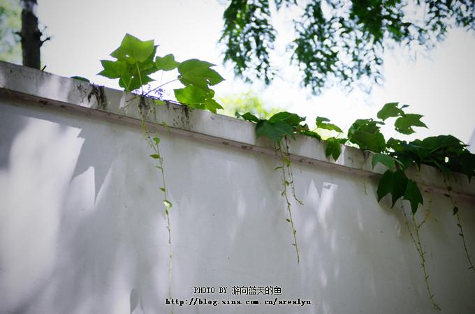 上海5日自由行美景美食文化的香蕉美食,南京小资的图片之旅图片