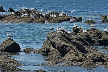 美差+我拍过大连、杭州、成都、安吉、海螺沟水库西大洋攻略图片