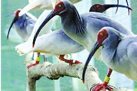除长颈鹿,斑马,非洲驼鸟外,其余15种为西安动物园有史以来首次展出;西