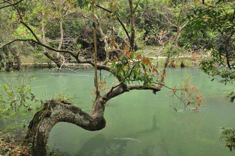 贵州游记之荔波茂兰喀斯特森林