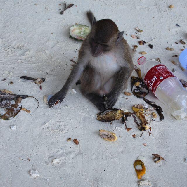 猴岛上的猴子.垃圾好多啊.
