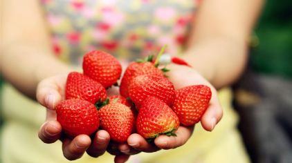 聚龙岛生态园草莓甘蔗采摘 (7).jpg