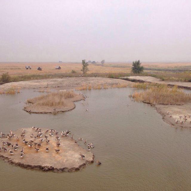 盘锦红海滩景区的第一个景点苇海观鹤