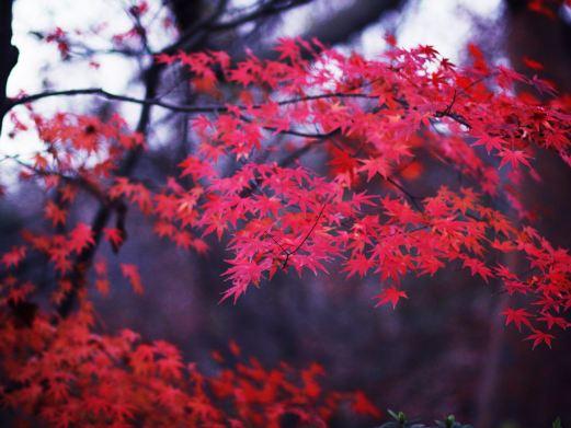 杭州植物园图片