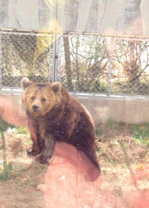 马上拍!野生动物园的冬天