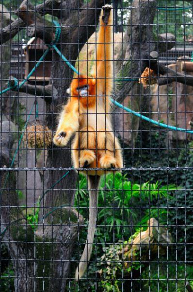 上海动物园 - 携程社区