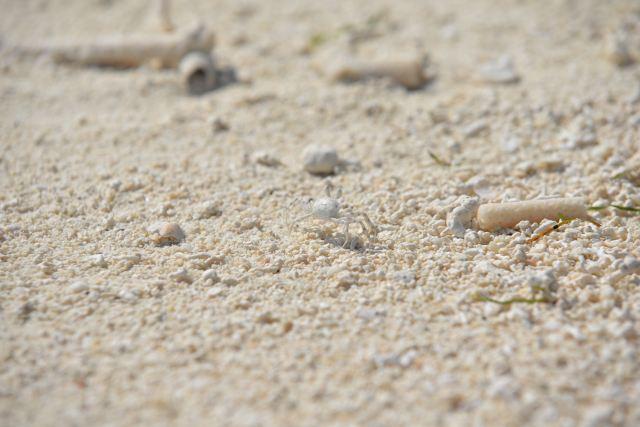 海岛素材白色大理石
