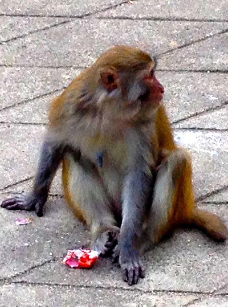 金丝猴子图片大全可爱