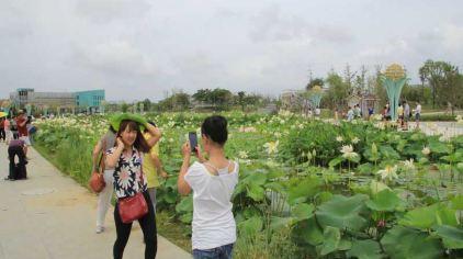 亚沙水生植物园3.jpg