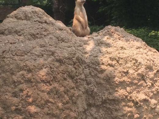 上海野生动物园图片