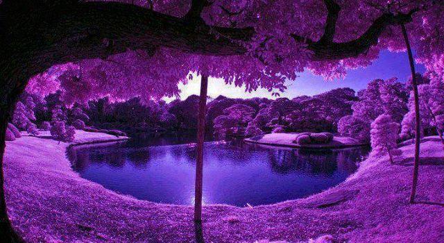 美得震撼】世界上最美的六大薰衣草