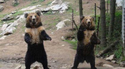贵州森林野生动物园门票