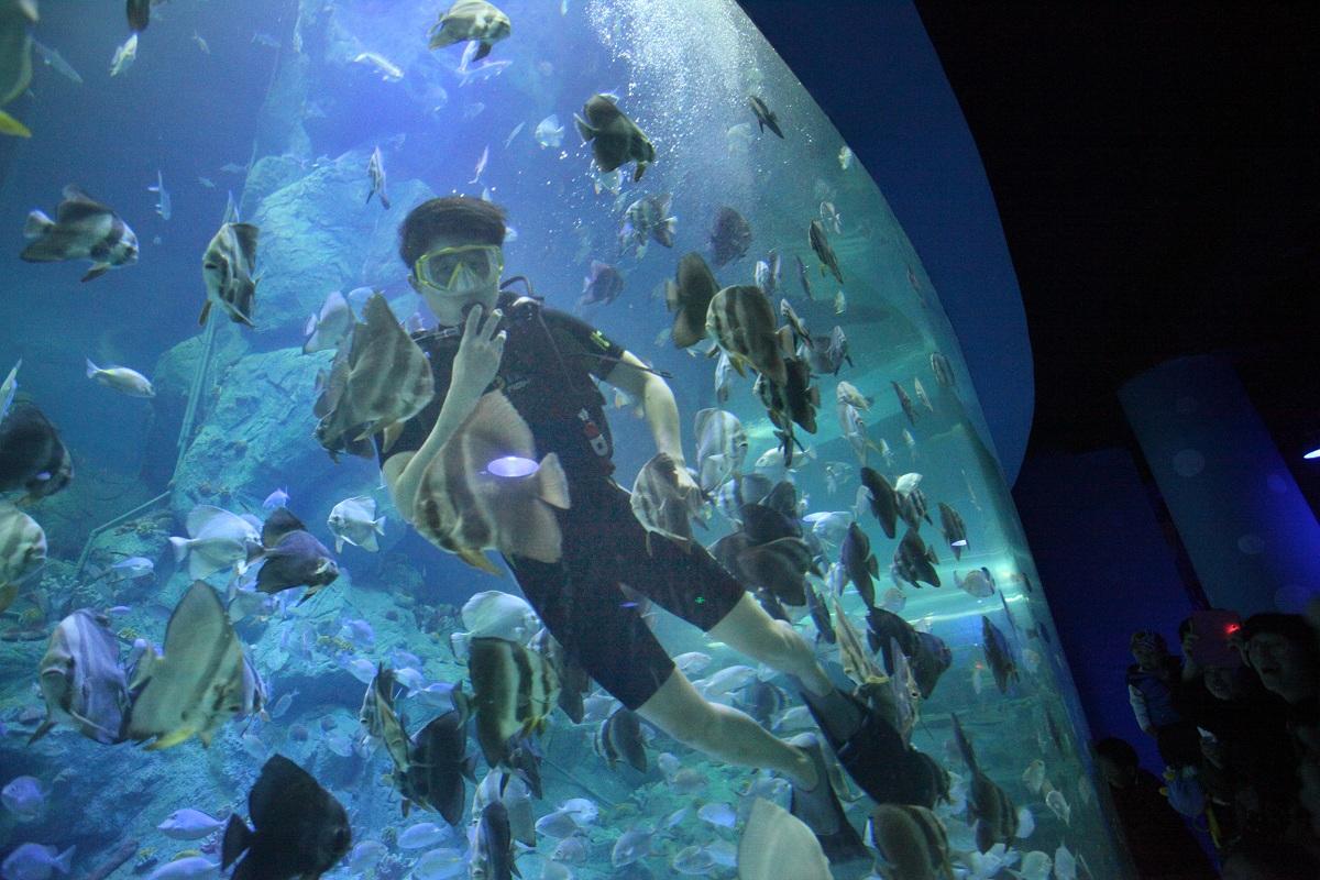威海神游海洋世界是由华夏集团投资5亿元在华夏城景区的北侧打造神游海洋文化馆项目,与依山傍水的自然美景相融合,形成山中有海的奇景,主体建筑面积4.3万平方米,包括了消失的雨林区、海洋文化体验区、极地风光区、海洋动物表演区四个部分,建成后,将有大量特色稀有鱼类入住,还有濒危动物白鲸,国家一级保护动物中华鲟等,同时复原我国珊瑚礁生态群的旖旎与绚丽,使游客在游览之余,可以加深对海洋地理及生物知识的了解。