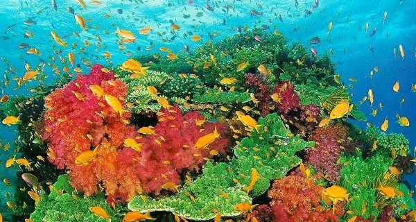 图巴塔哈群礁国家公园