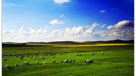 蓝天牧场风景区