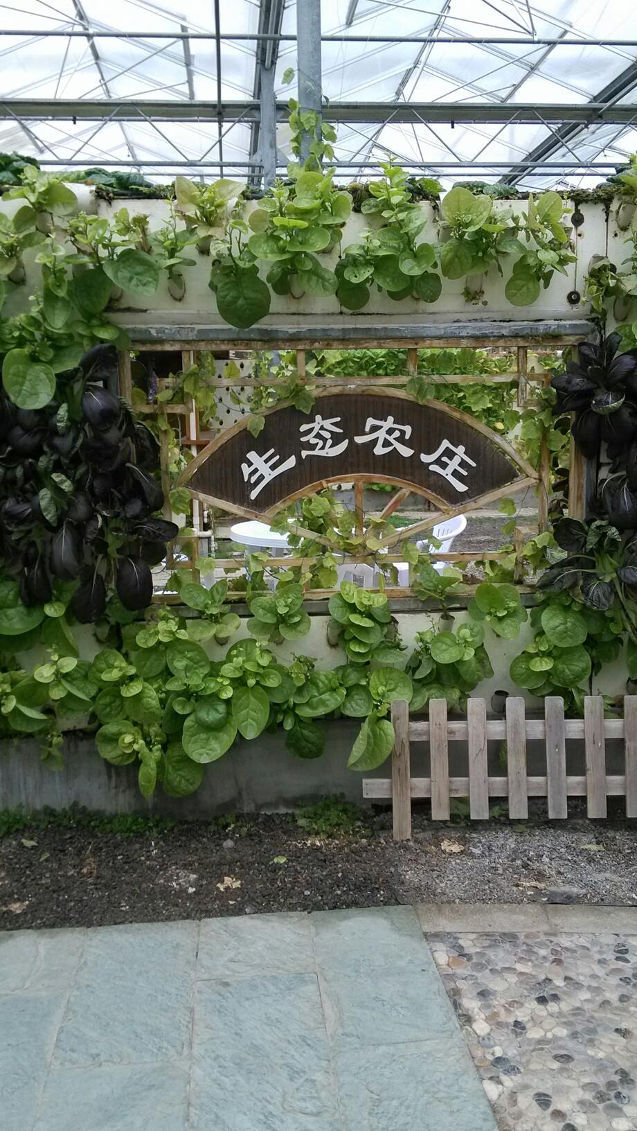 奉贤现代都市菜园